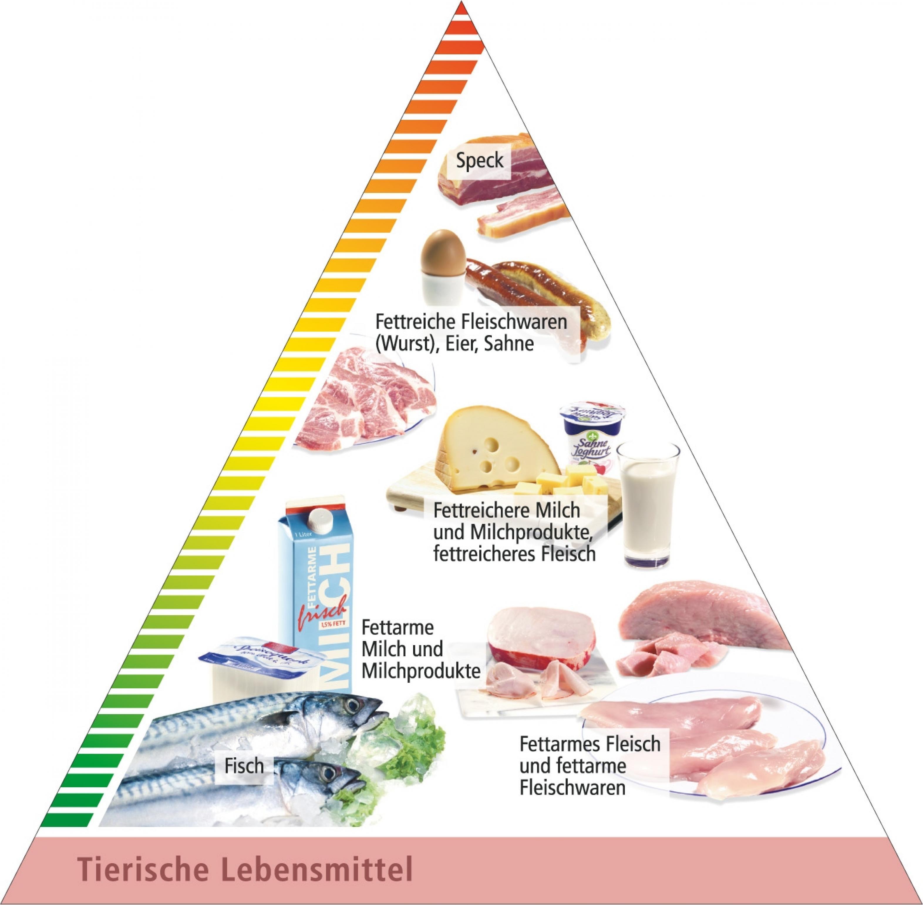 tierisches fett gesund